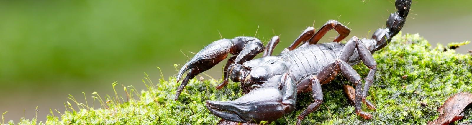 How to Get Rid of Scorpions in Phoenix, AZ | SOS Blog
