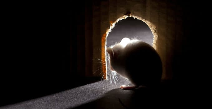 Mouse looking out of hole, interior point of view